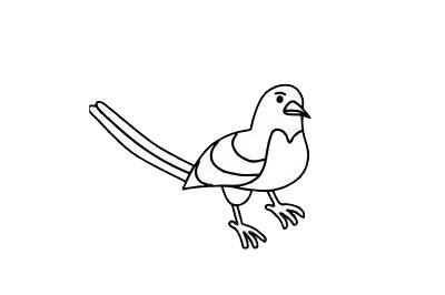 喜鹊简笔画图片