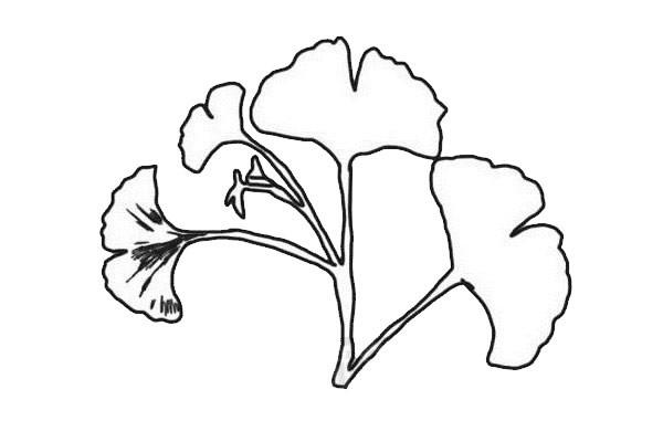 鱼尾葵叶简笔画步骤画法教程