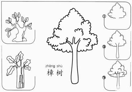 【樟树怎么画】樟树简单画怎么画 香樟树简笔画步骤图