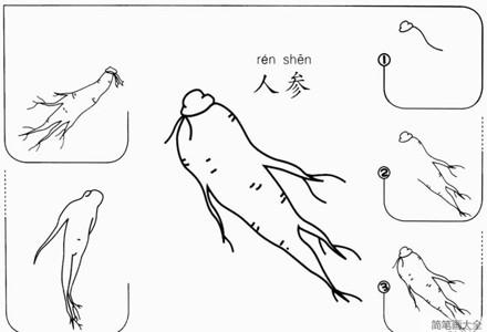 【人参简笔画】儿童画人参怎么画的简笔画步骤图教程