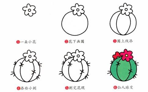 仙人球简笔画画法步骤