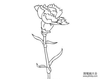 康乃馨简笔画素描素材欣赏