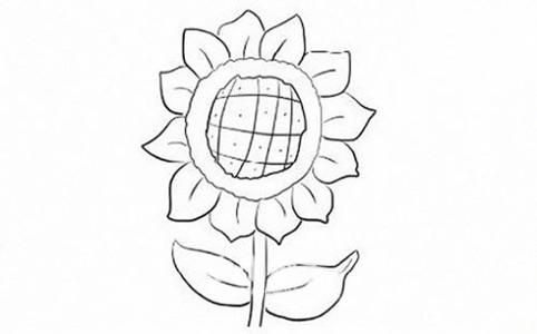 向日葵简笔画步骤图解教程
