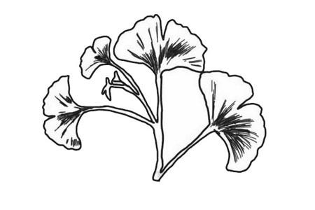 鱼尾葵叶简笔画步骤画法教程-叶子怎么画简笔画图片