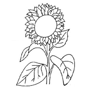 手绘向日葵简笔画作品