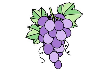 一串葡萄怎么画 葡萄简笔画画法步骤图片教程