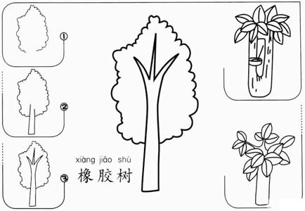简笔画橡胶树怎么画 海南橡胶树图片简笔画