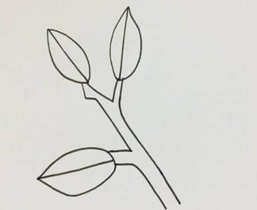 冬青树简笔画幼儿 彩色画法