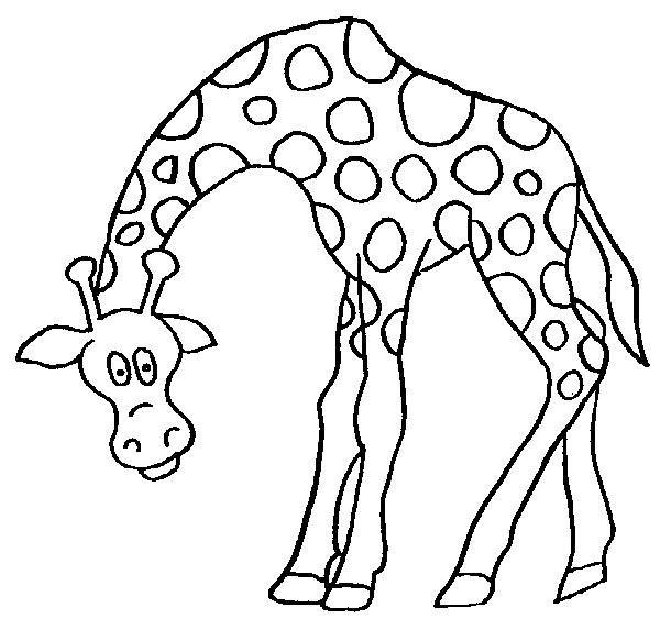 关于长颈鹿的小故事,图片,简笔画-学笔画