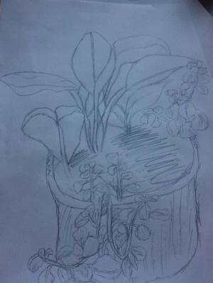 美丽的植物