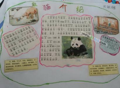 关于熊猫的手抄报