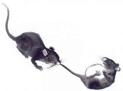 抢鸡蛋的两只老鼠