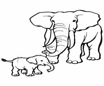 小象的名片_500字