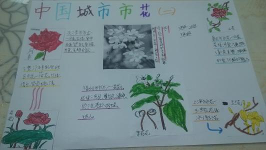 城市市花市树手抄报图片、资料