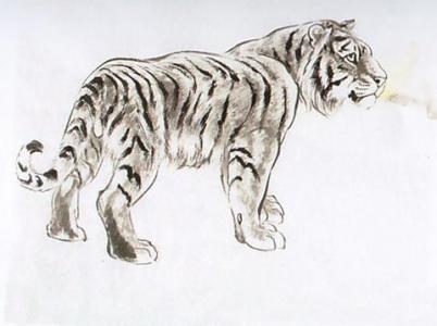 老虎的领地