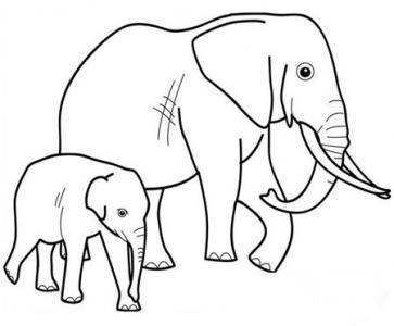 小象的鼻子