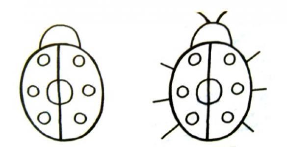 七星瓢虫生活习性