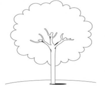 一棵大树的自述