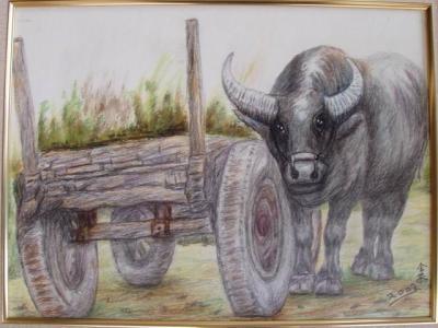 勤劳的老牛